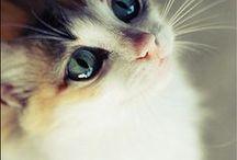 Gatinhos muito fofos.... / Assim é nosso dia a dia com muita paz e amor......