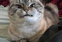 Cats / Cute cats, funny cats, all adorable!