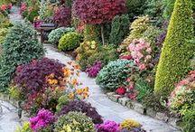 Gardens / Because gardens are beautiful