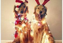 Holidays / by Gianna Galli