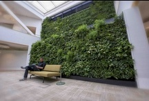 Vertical green / Natural Wall / Vertical Green / Living Green Wall
