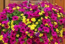 Hanging Baskets / Because hanging baskets are simply beautiful