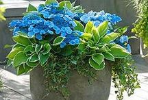 Container Gardening / Gardening in pots and containers