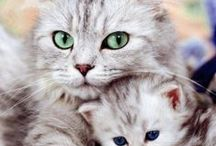 Cats / Because cats are lovely in every way!