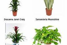 Plants...