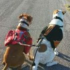Reviews by Rene' ~ Dog Gear / A board about all kinds of dog products, from toys to hiking gear to bed!