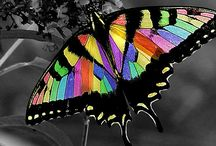 Butterflies / by Judy Turnquist