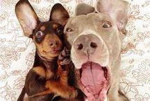 Cuddly Pals / Animals