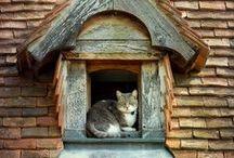 Ablakok, ajtók / Beszédes ablakok, ajtók.
