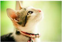 Cat ❤️ / 猫