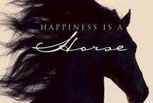 Horse ❤️ / 馬