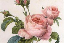 Botanical / 植物画
