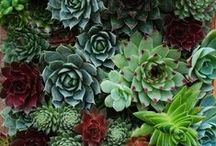 Plants and Container Gardening / Container gardening ideas for patios, porches and kitchens. Urban gardens, small space landscape design, and culinary herbs.