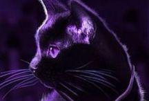 Purple / 紫