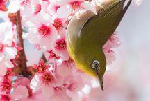 Sakura Ume Tubaki Fuji etc.. / 桜 梅 椿 藤 Cherry Plum Camellia Wisteria