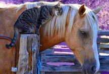 Horse & Buddies