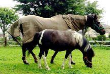 My Family ❤️ Horses & Cats / Horse Verde & Dona ❤️ Cats Fujinosuke, Sakura , Ayame & Suzu ❤️