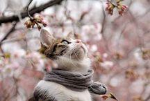 Cat ❤️ Blossom Cat