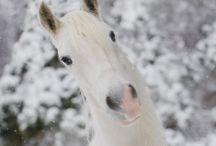 Horse ❤️ White horse