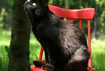 Cat ❤️ Black Cat