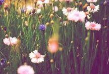 meadowes