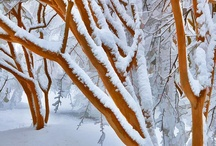 Shades of White ~ Winter