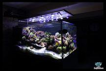 Le récif du belon / Aquarium recifal