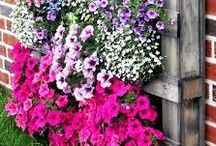 """Gardening / Gardening LOVE ~ tips and ideas for green thumbs: vegetable gardens, potted plants, growing herbs, creative planting ideas and more."""""""