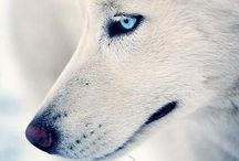 Animals/Zvieratká / ♣️
