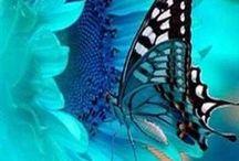 Butterflies/Motýliky