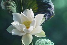 Flowers&Plants/Kvietky&Rastlinky / ♣️