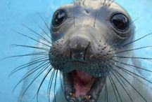 Sea Creatures/Morské Príšerky / Incredible Creatures of Seas and Oceans  ♣️ Zaujímavé Podmorské Bytosti