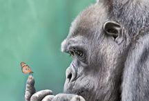 Apes&Monkeys/Opičky / ♣️