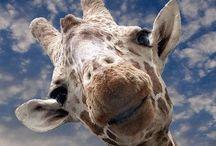 Exotic Animals/Exotické Zvieratká