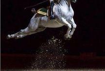 Equestrian Culture / High dressage