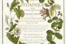 Botaniska tryck