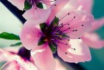 ♥ Sense: Flora