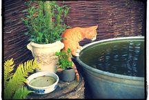 Mein Garten / Meine Spielwiese