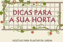 Horta, Jardim, Aromáticas.