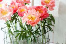 Flowers / ❁ 花