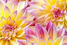 Kleur - Geel en pers