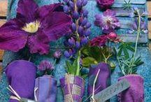 Kleur - Pers en blou