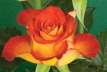 Kleur - Oranje en geel
