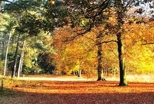 Wij houden van de herfst / by Fletcher Hotels