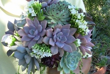 Tema - Vetplant (Succulent)