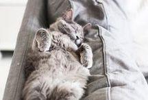 Ambiance cozy