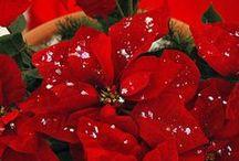 Noel rouge et blanc / Décoration de Noel en rouge et blanc