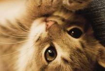 Kittens !! ♥ ♥ ♥ ♥