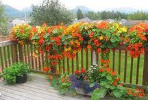 Balkonok, erkélyek és kertek (balconies, gardens) / balkonnövények és álom kertek