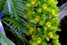 Orhideák (Orchid) / a legkülönlegesebb virágfajtáról